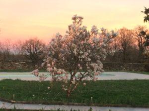 Lou Papagai magnoliasunset